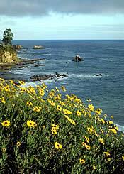 Laguna Beach Wedding, Wedding in Laguna Beach, Laguna Wedding, Laguna Beach Wedding Directory, Laguna Beach Wedding Reception.